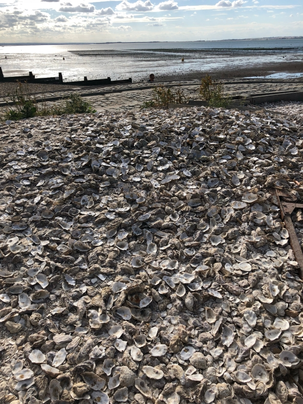 pile of oyster shells left on whitstable beach